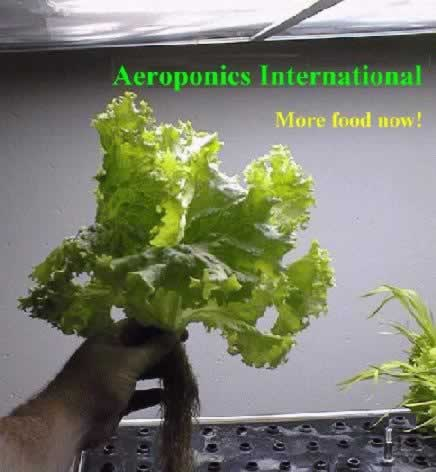 Grow more pesticide-free food - faster with less nutrients and water
