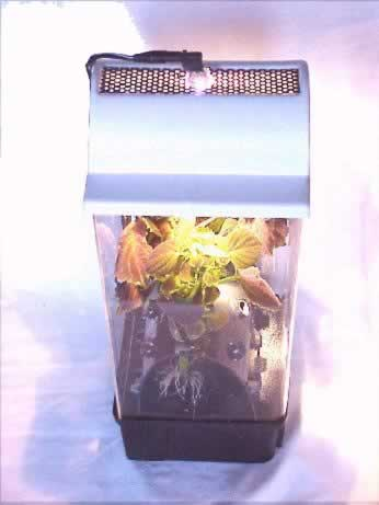 Aeroponic BenchTop - Professional Unit (price: $289.99 includes asseccories and light dome