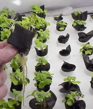 Use Aero-Pads for fast germination of all kinds of seeds