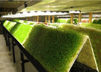 ° Aeroponic - Units and Systems