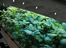 Aeroponic GS-V w/NEXGen Light Array