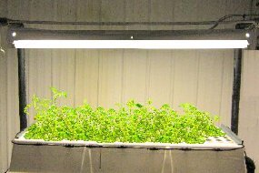 Aeroponic GS Unit w/Light Array